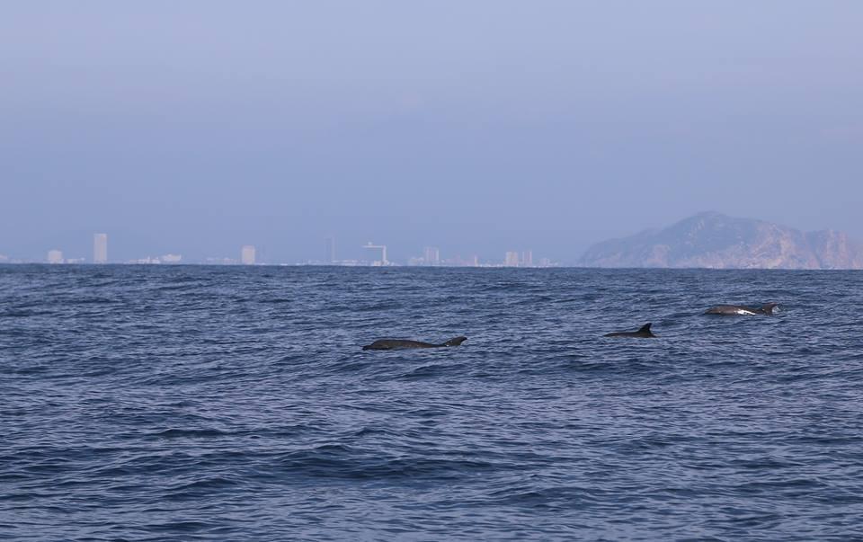 ballenas mazatlan