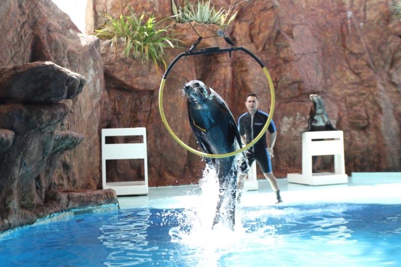 acuario mazatlan